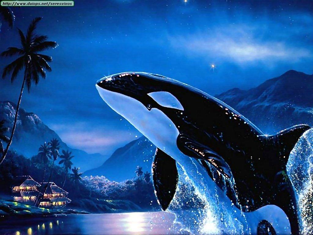fotos de ballenas y orcas i. Black Bedroom Furniture Sets. Home Design Ideas