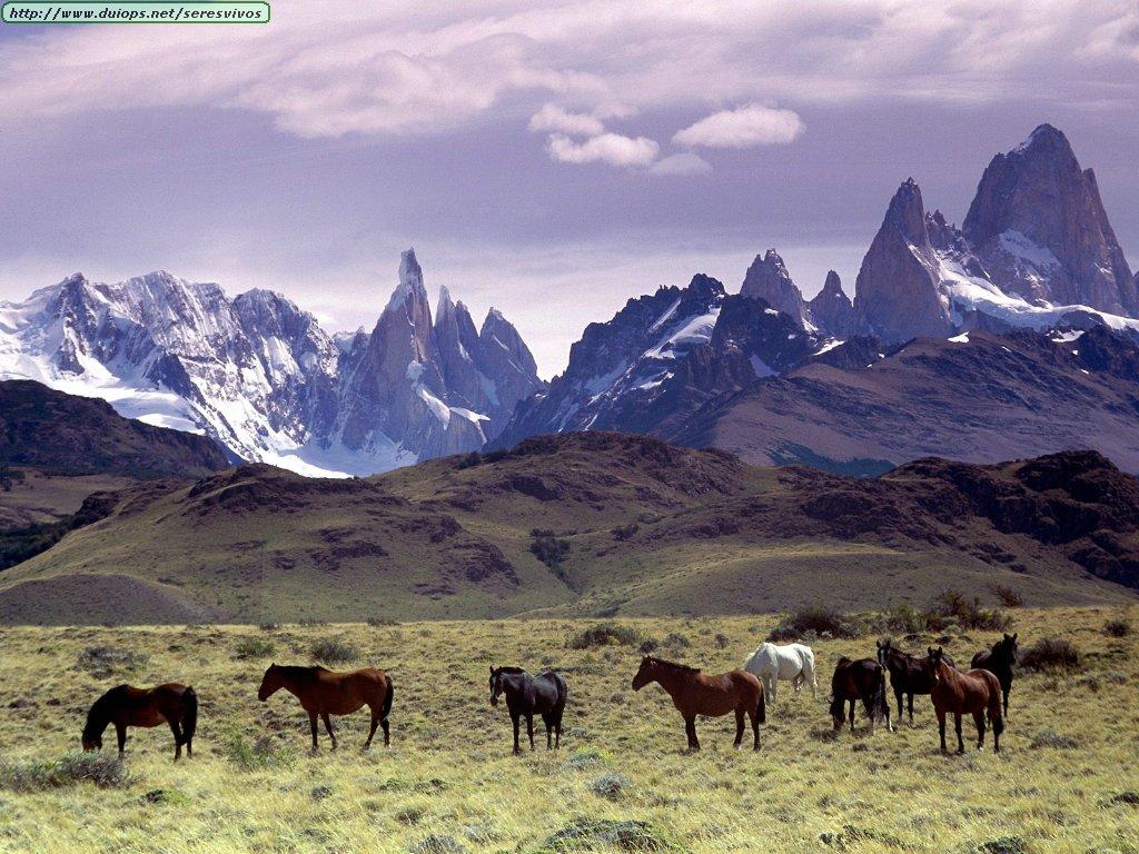 http://www.duiops.net/seresvivos/galeria/caballos/141.JPG