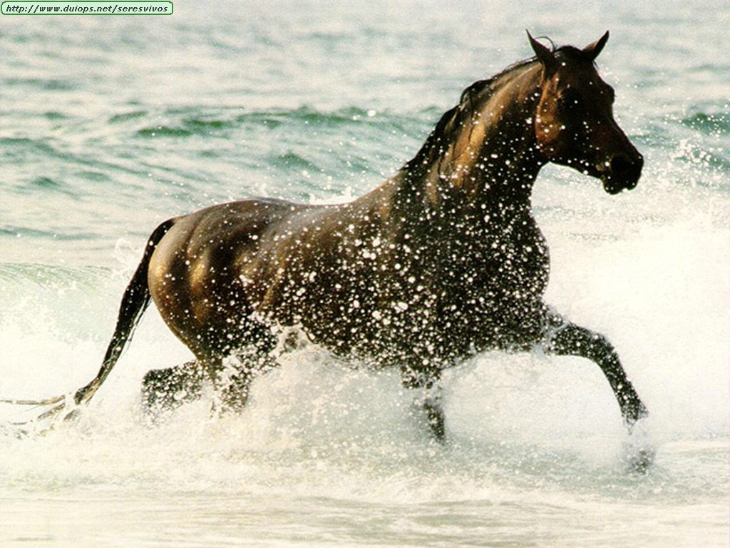 http://www.duiops.net/seresvivos/galeria/caballos/1889.jpg