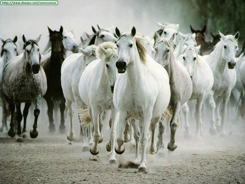 http://www.duiops.net/seresvivos/galeria/caballos/52.jpg