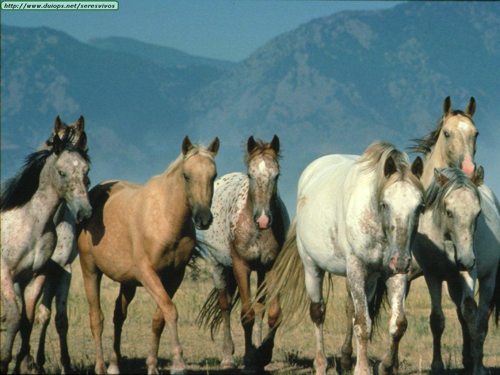 http://www.duiops.net/seresvivos/galeria/caballos/Animals%20009.jpg