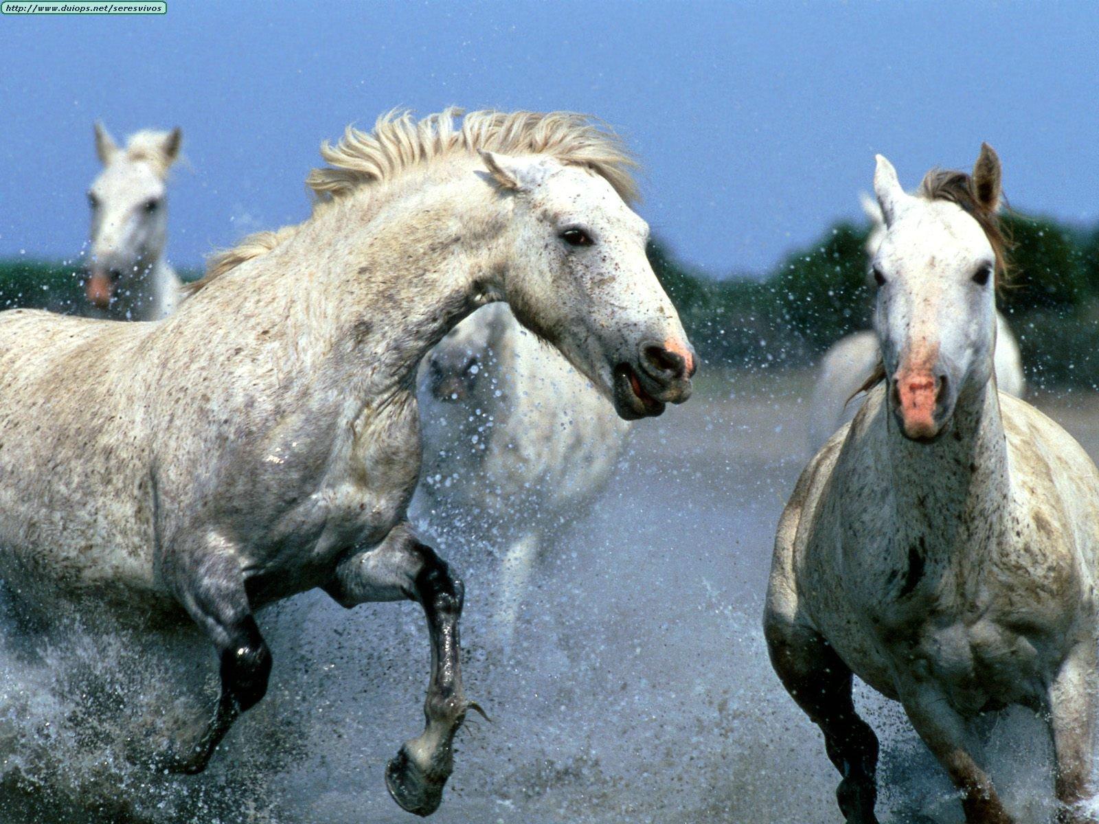 http://www.duiops.net/seresvivos/galeria/caballos/Animals%20Horses_Afternoon%20Race.jpg
