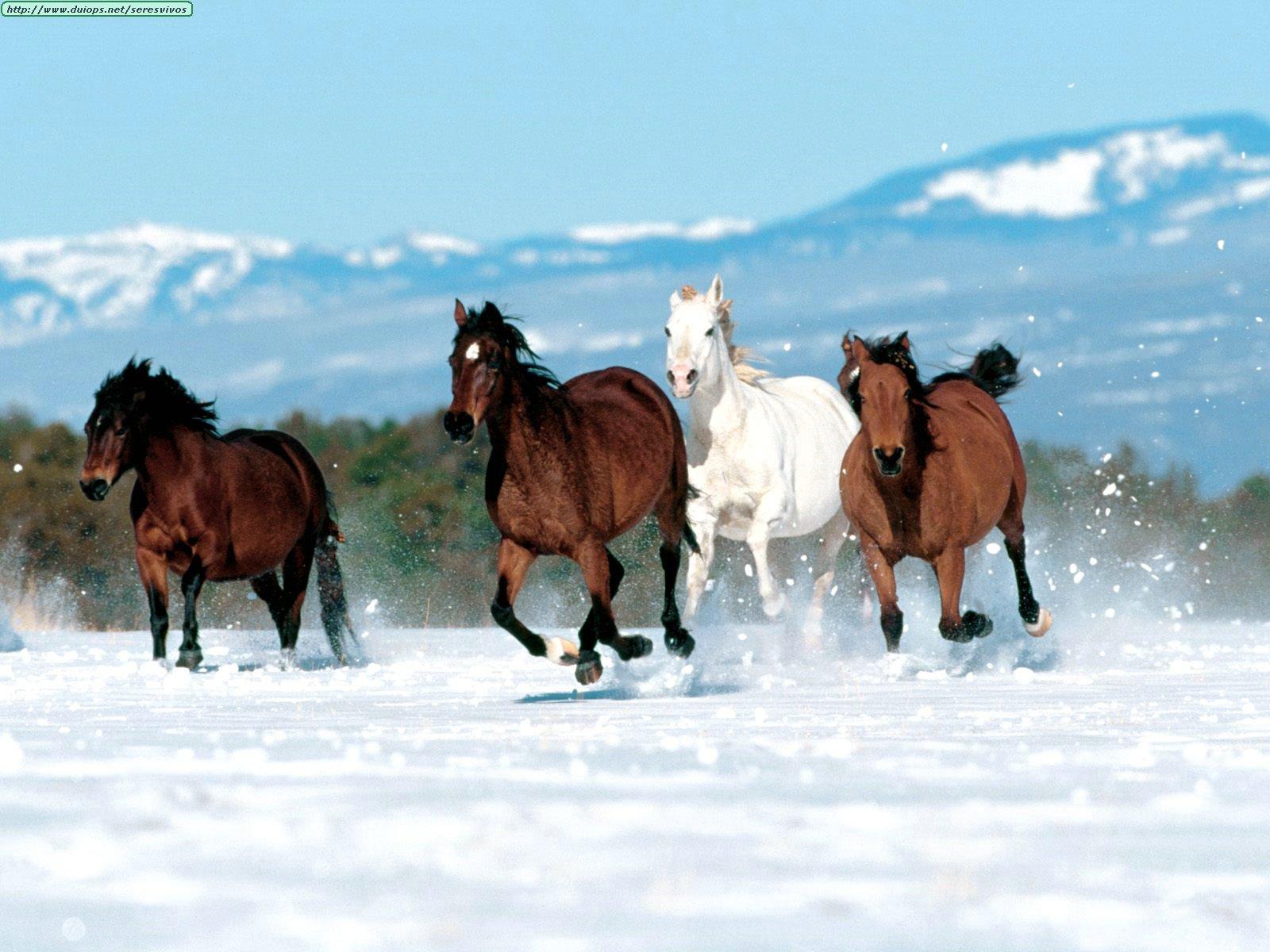http://www.duiops.net/seresvivos/galeria/caballos/Animals%20Horses_Born%20to%20Run.jpg