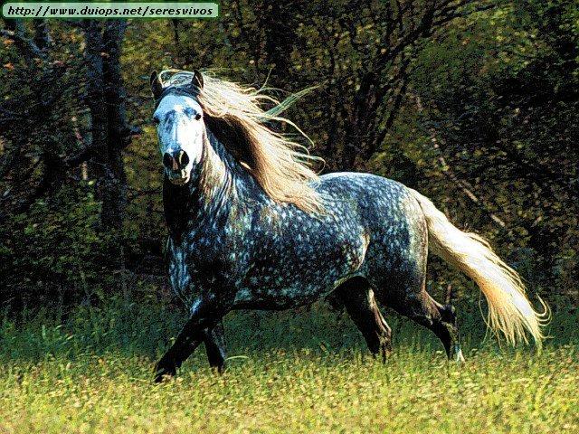 http://www.duiops.net/seresvivos/galeria/caballos/Animals%20Horses_Dapple%20Grey%20Cantering%20Left.jpg