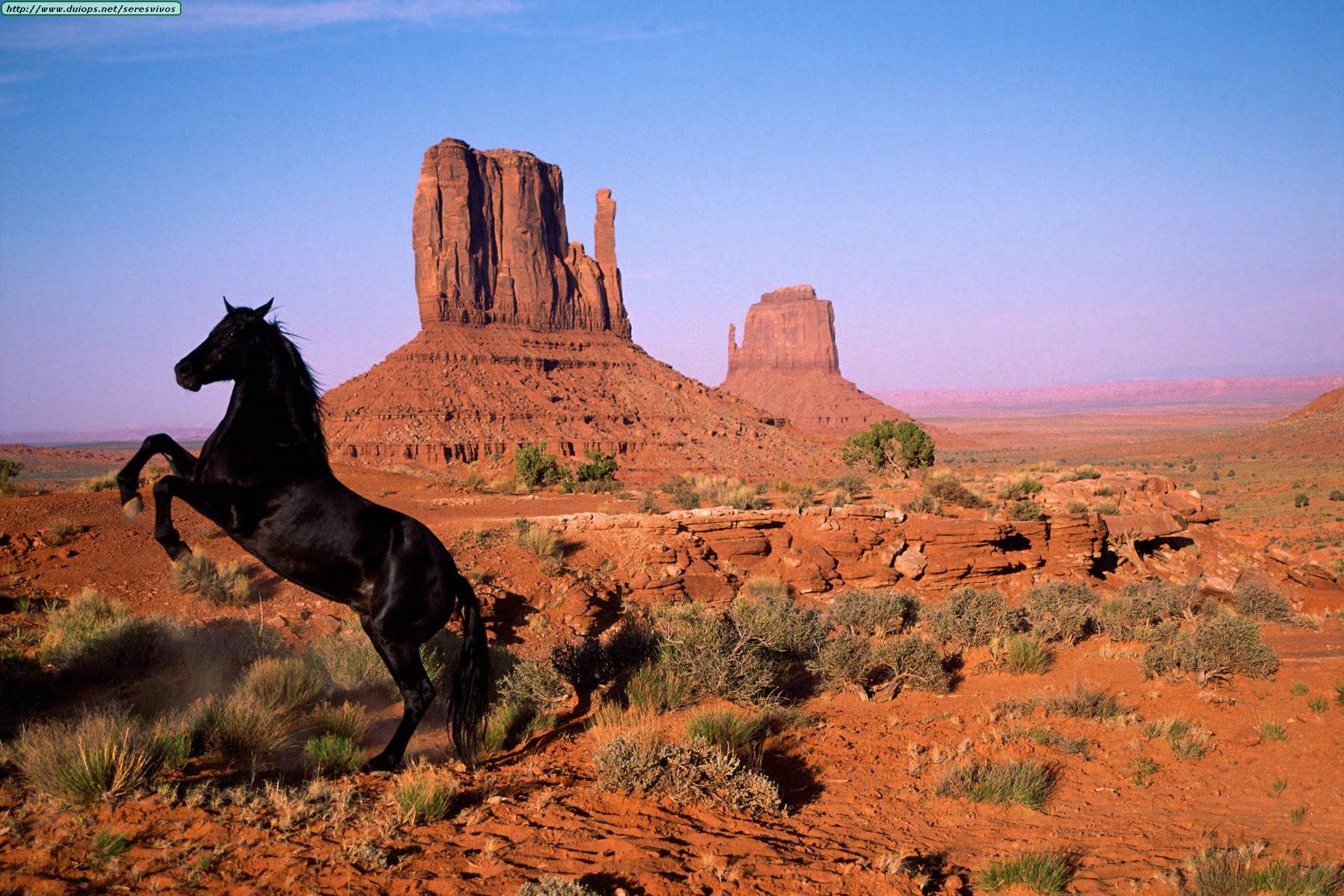 http://www.duiops.net/seresvivos/galeria/caballos/Animals%20Horses_Graceful%20Power,%20Monument%20Valley,%20Utah.jpg