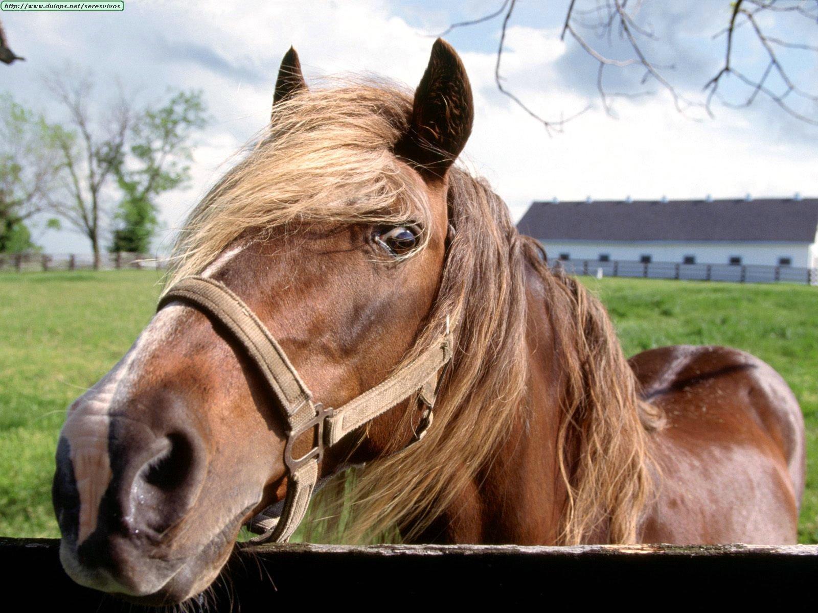 http://www.duiops.net/seresvivos/galeria/caballos/Animals%20Horses_Hello,%20Partner.jpg