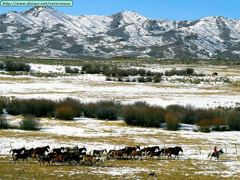 http://www.duiops.net/seresvivos/galeria/caballos/Animals%20Horses_Homeward%20Bound.jpg