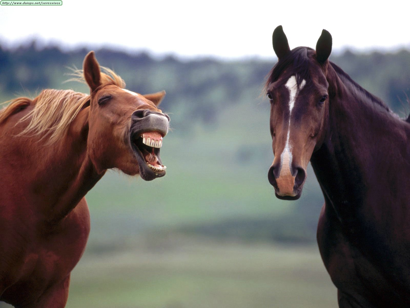 http://www.duiops.net/seresvivos/galeria/caballos/Animals%20Horses_Horse%20Play.jpg