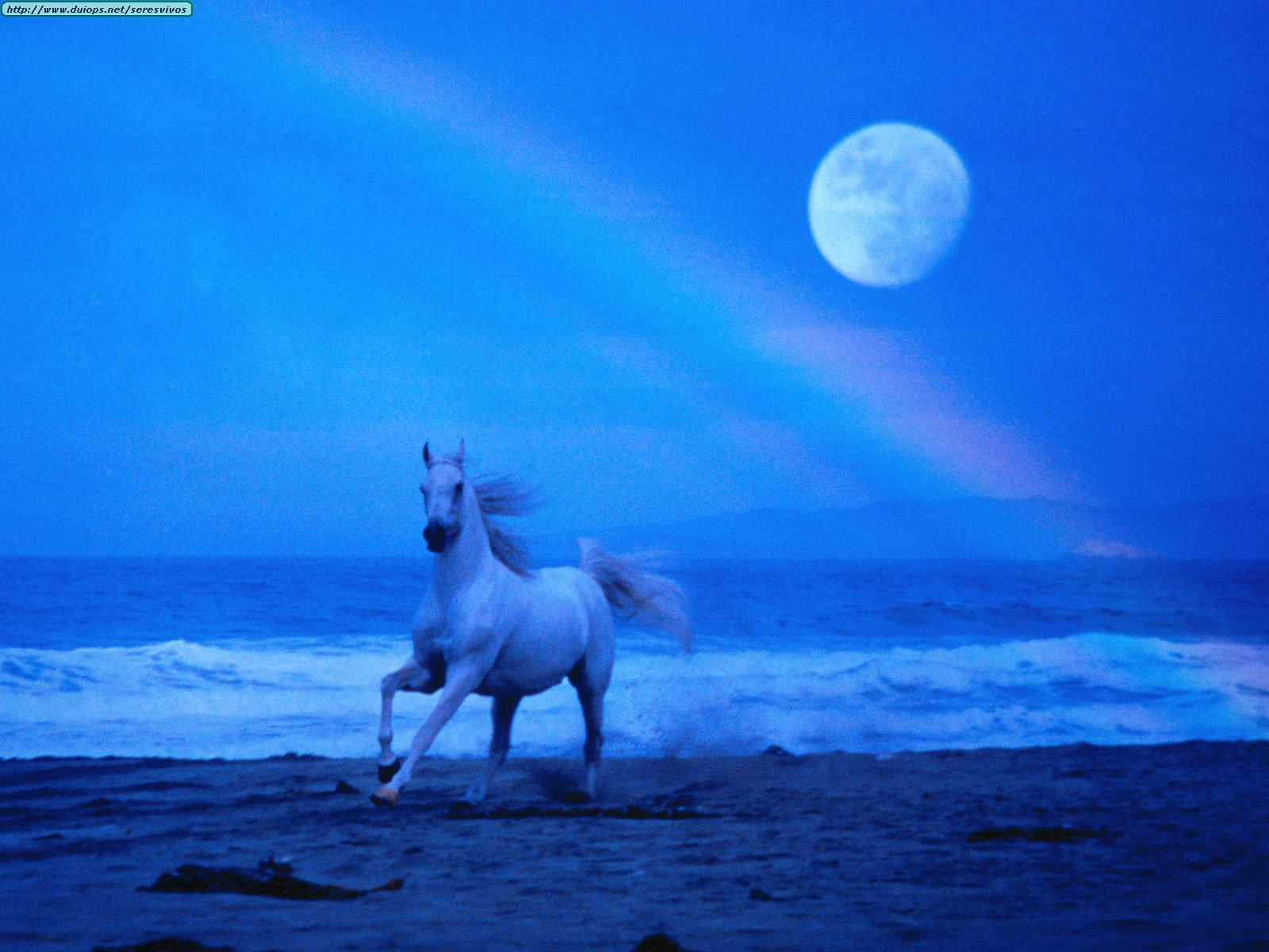 Varias imagenes de caballos