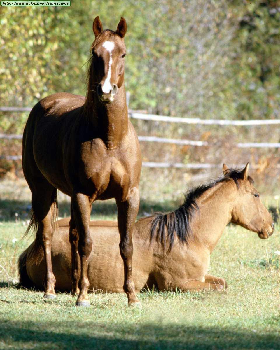 http://www.duiops.net/seresvivos/galeria/caballos/Animals%20_ANML0018.JPG