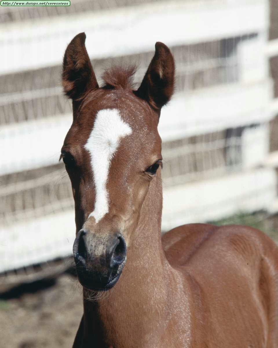 http://www.duiops.net/seresvivos/galeria/caballos/Animals%20_ANML0023.JPG