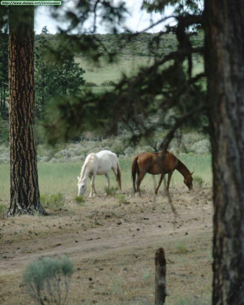 http://www.duiops.net/seresvivos/galeria/caballos/Animals%20_ANML0051.JPG