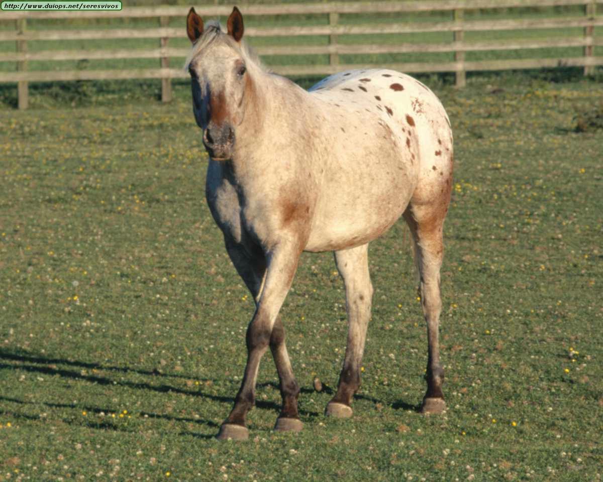 http://www.duiops.net/seresvivos/galeria/caballos/Animals%20_ANML0055.JPG