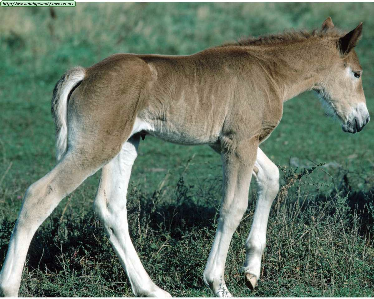 http://www.duiops.net/seresvivos/galeria/caballos/Animals%20_ANML0087.JPG