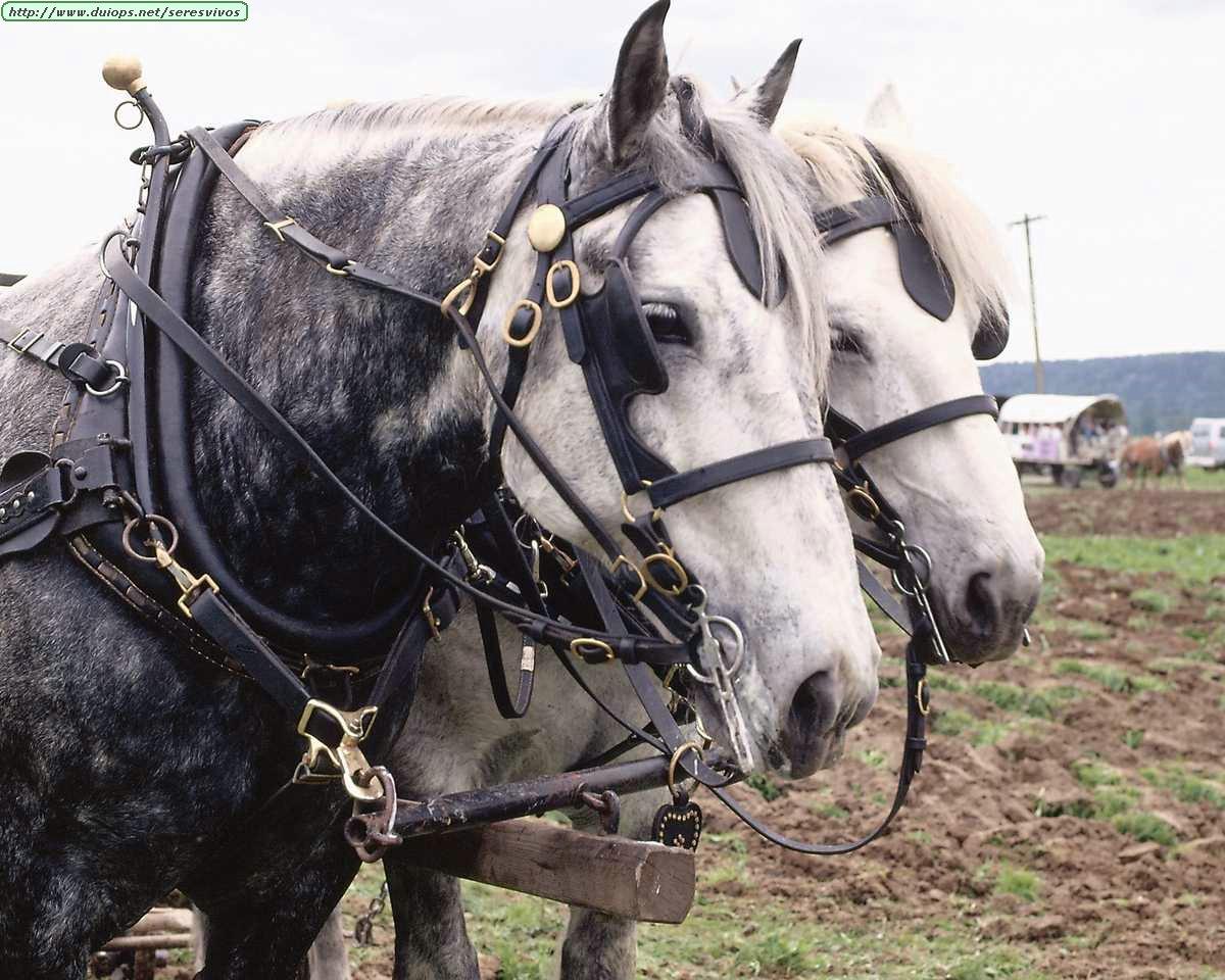 http://www.duiops.net/seresvivos/galeria/caballos/Animals%20_ANML0127.JPG