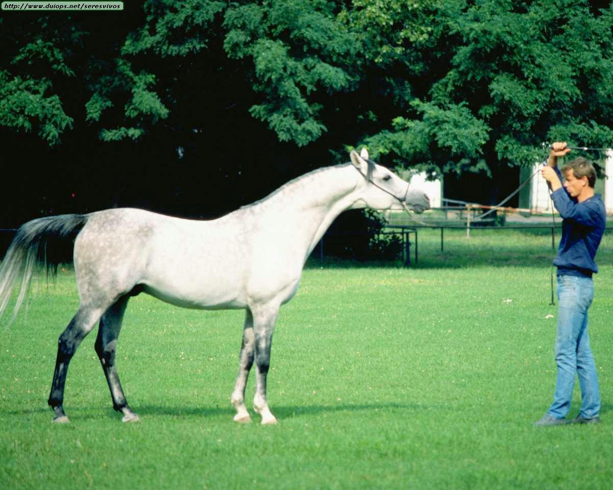 http://www.duiops.net/seresvivos/galeria/caballos/Animals%20_ANML0128.JPG