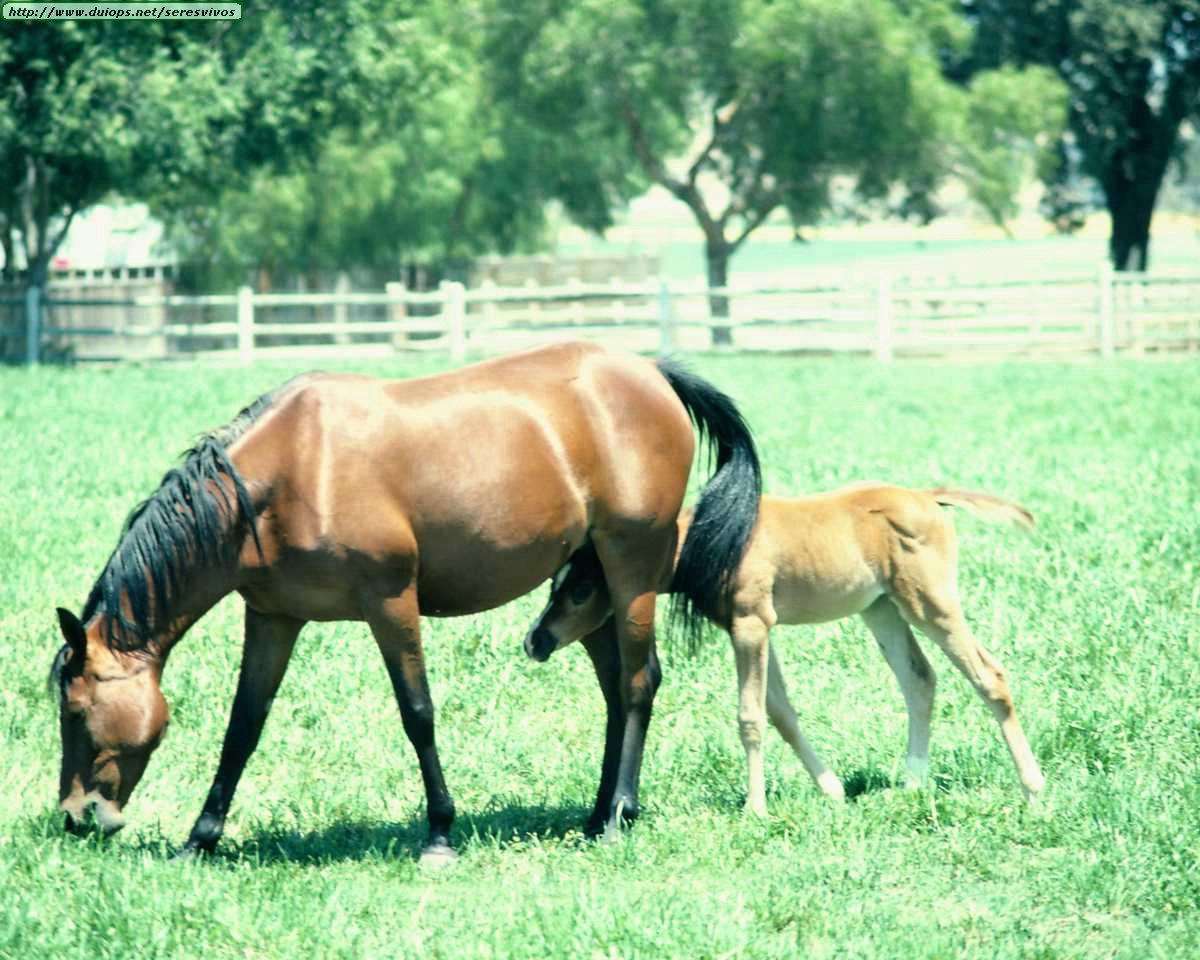 http://www.duiops.net/seresvivos/galeria/caballos/Animals%20_ANML0130.JPG