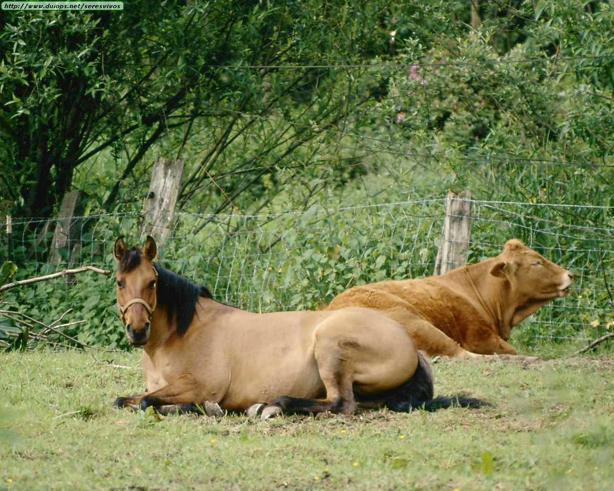 http://www.duiops.net/seresvivos/galeria/caballos/Animals%20_ANML0131.JPG
