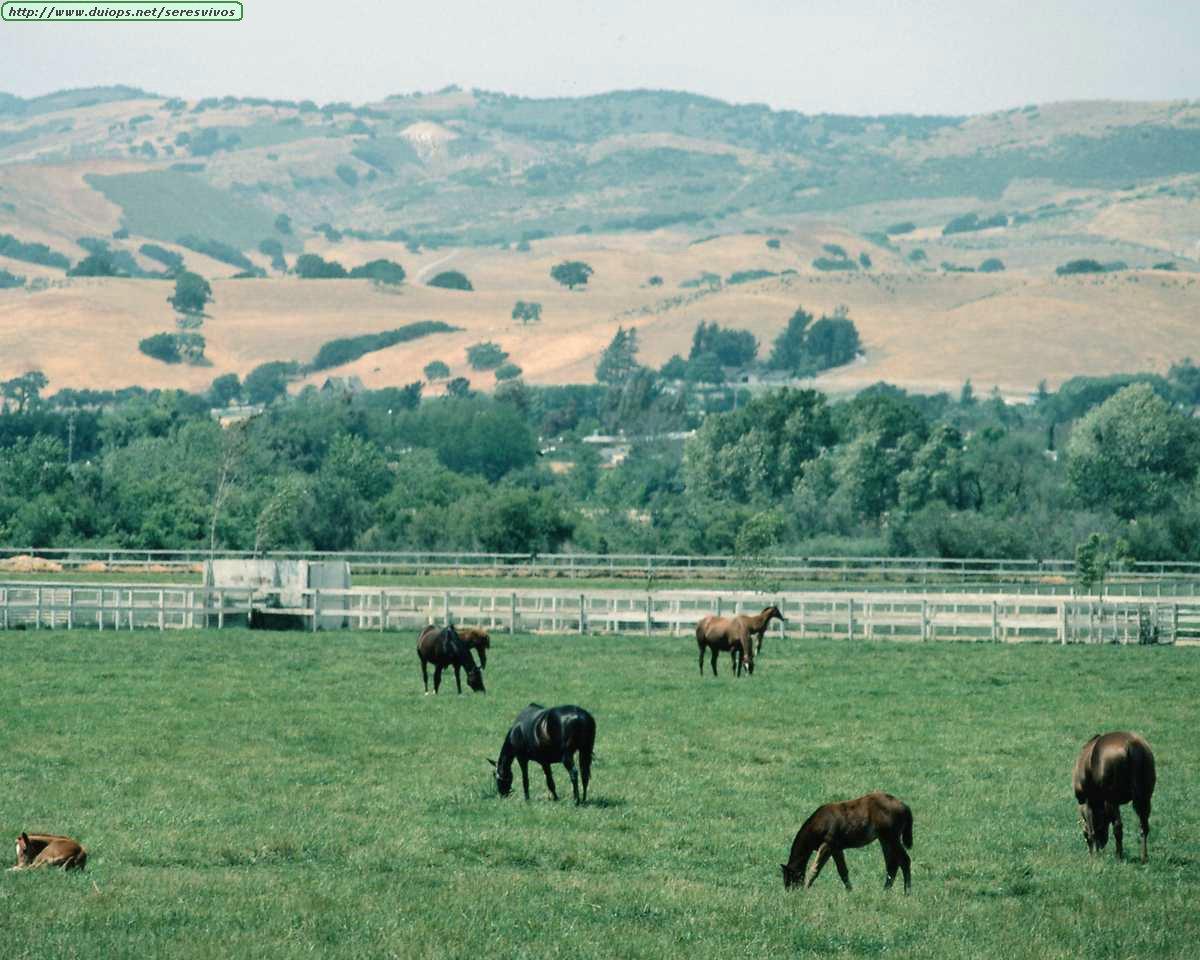 http://www.duiops.net/seresvivos/galeria/caballos/Animals%20_ANML0132.JPG