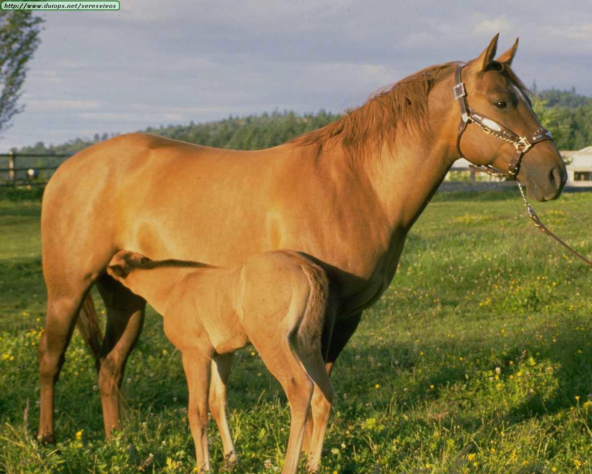 http://www.duiops.net/seresvivos/galeria/caballos/Animals%20_ANML0162.JPG