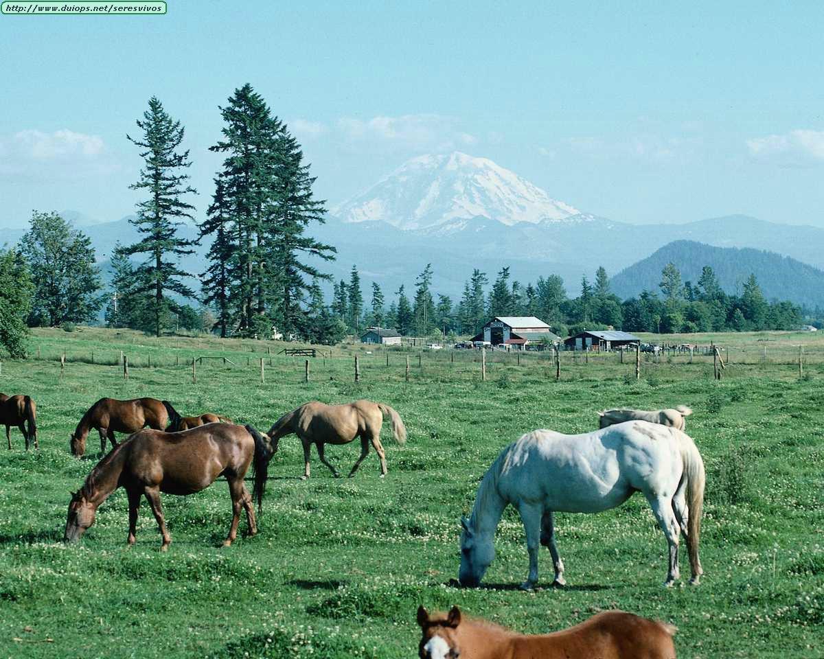 http://www.duiops.net/seresvivos/galeria/caballos/Animals%20_ANML0167.JPG