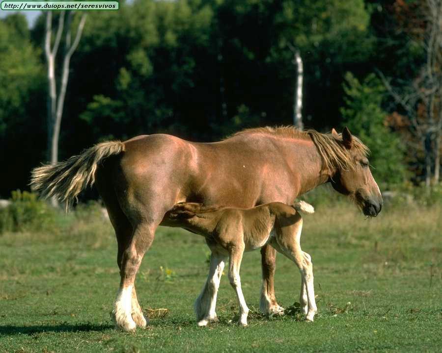 http://www.duiops.net/seresvivos/galeria/caballos/Animals%20_ANML0183.JPG