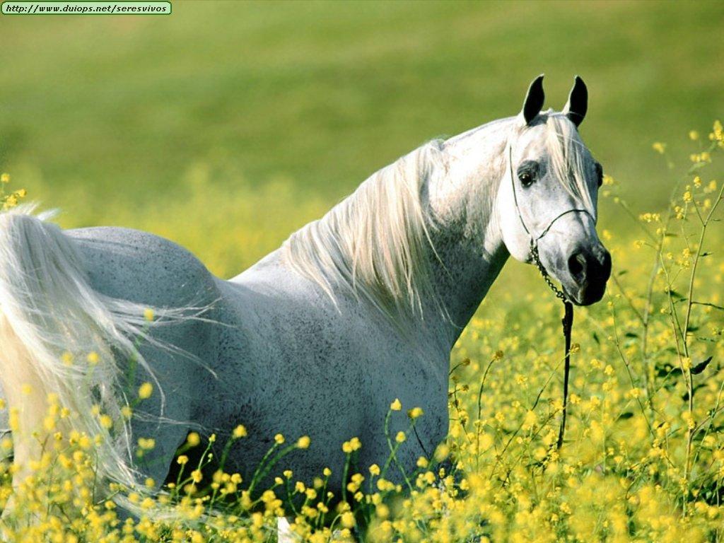 Los animales mas bellos del mundo (Wallpapers)