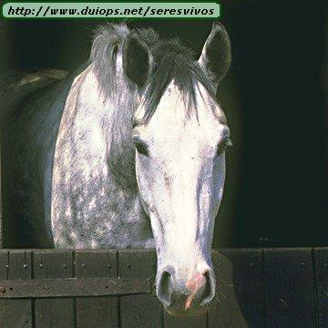 http://www.duiops.net/seresvivos/galeria/caballos/animal_05.JPG