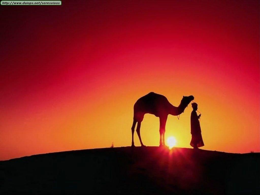Fotos de camellos y dromedarios