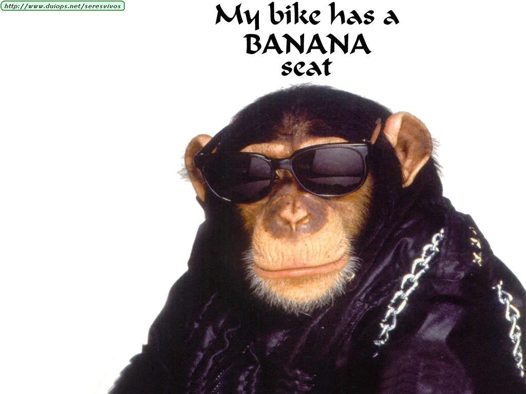 Monos graciosos