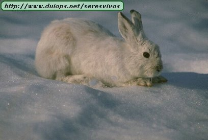 http://www.duiops.net/seresvivos/galeria/conejos/173083.jpg