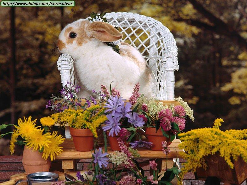 Conejos...