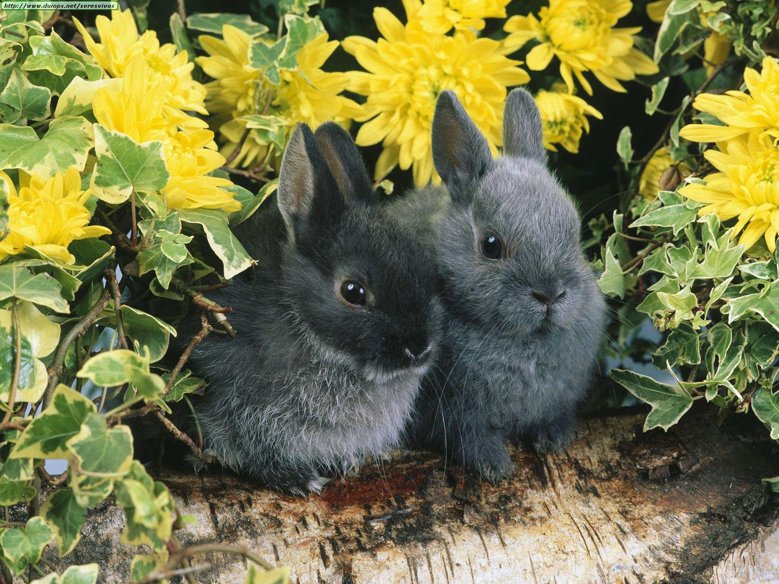 Imagenes de Conejos + 10 Curiosidades Conejos