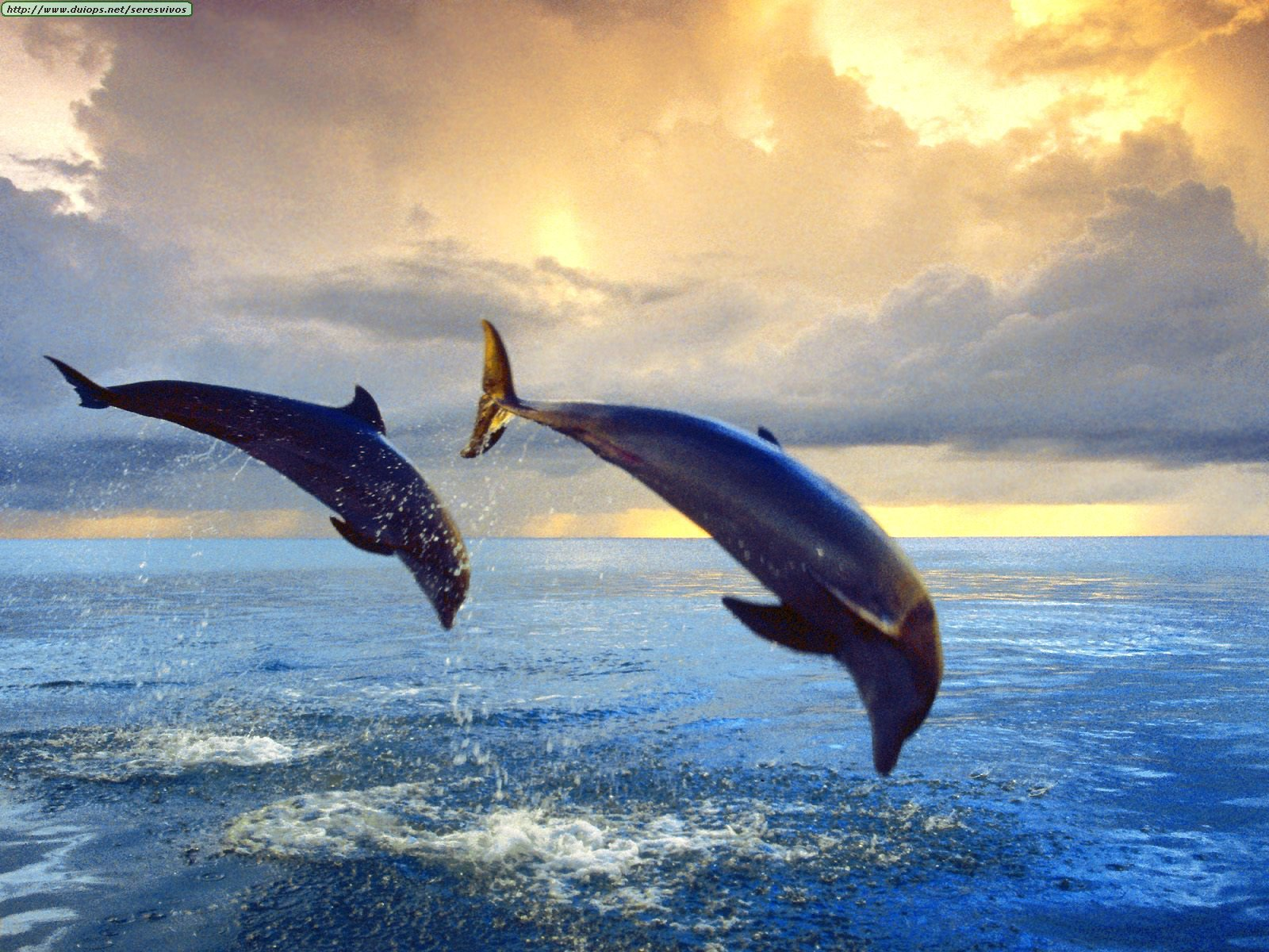 external image Bottlenose%20Dolphins.jpg