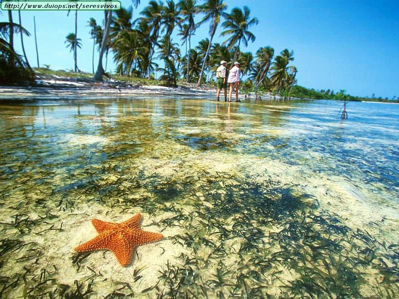 Meksiko - Page 4 Starfish,%20Yucatan%20Peninsula,%20Mexico