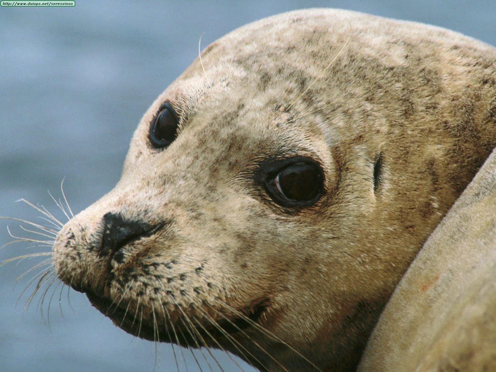 С мордами собак. животные. Подборка фотографий морских котиков