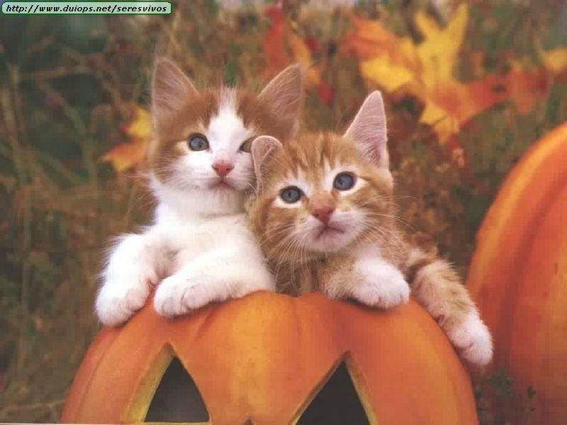 galeria gatos: