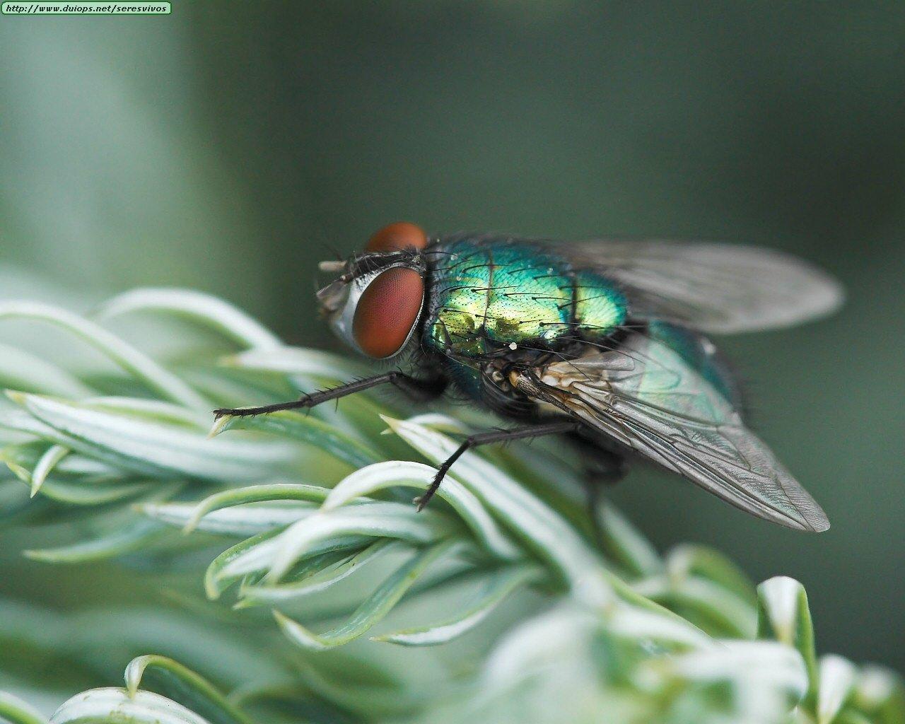 Fotos de insectos i - Fotos de insectos para imprimir ...