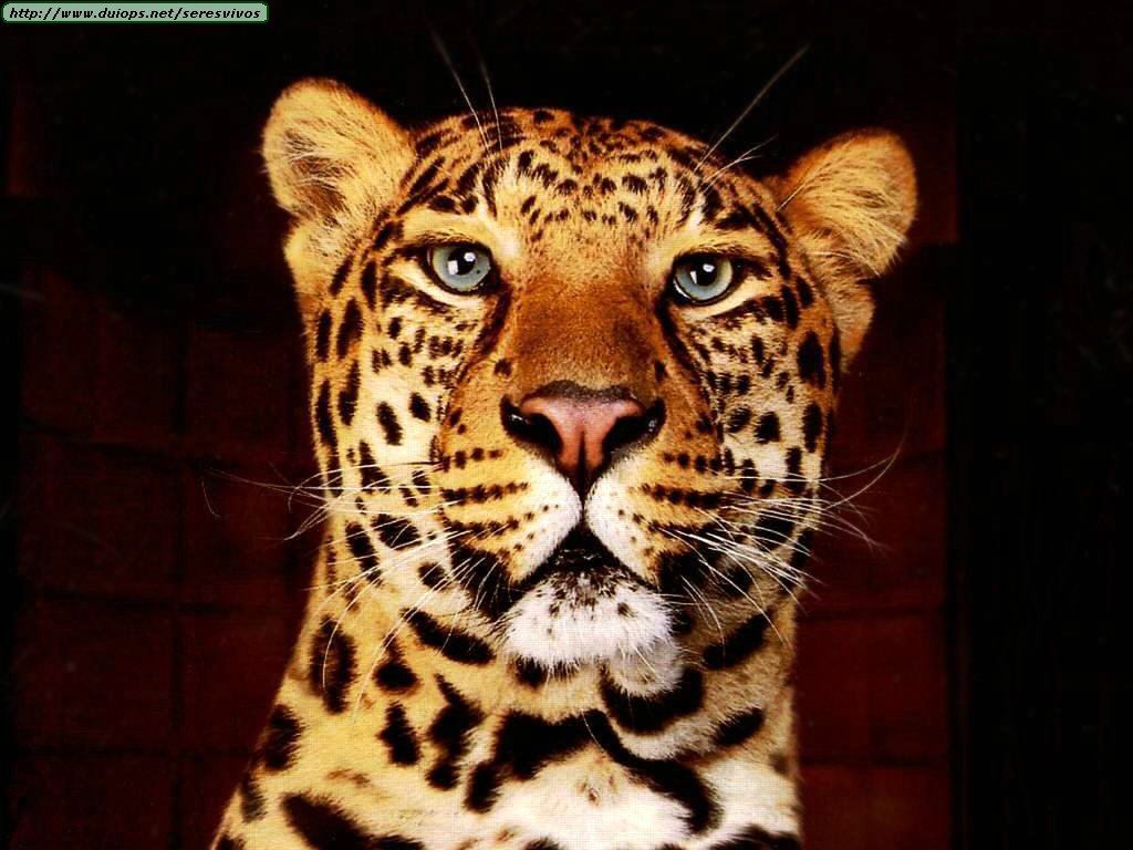 Los animales mas bellos del mundo (Wallpapers)