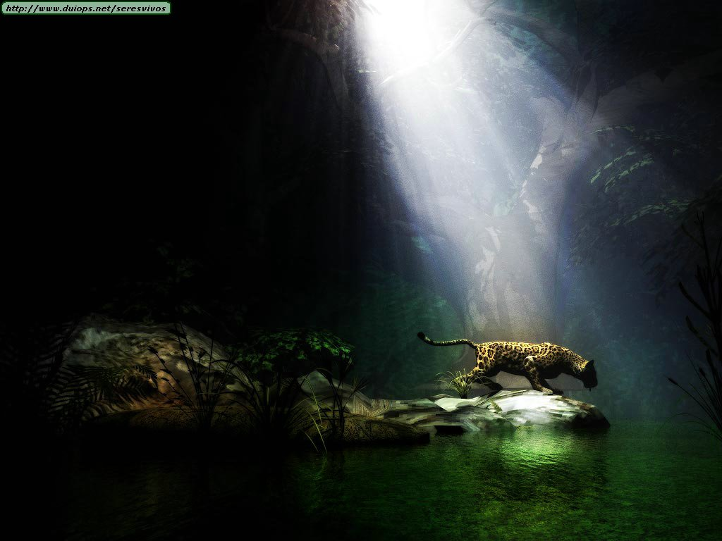 Popular Computer Wallpapers: Leopards, Cheetahs And Jaguars Photos (III