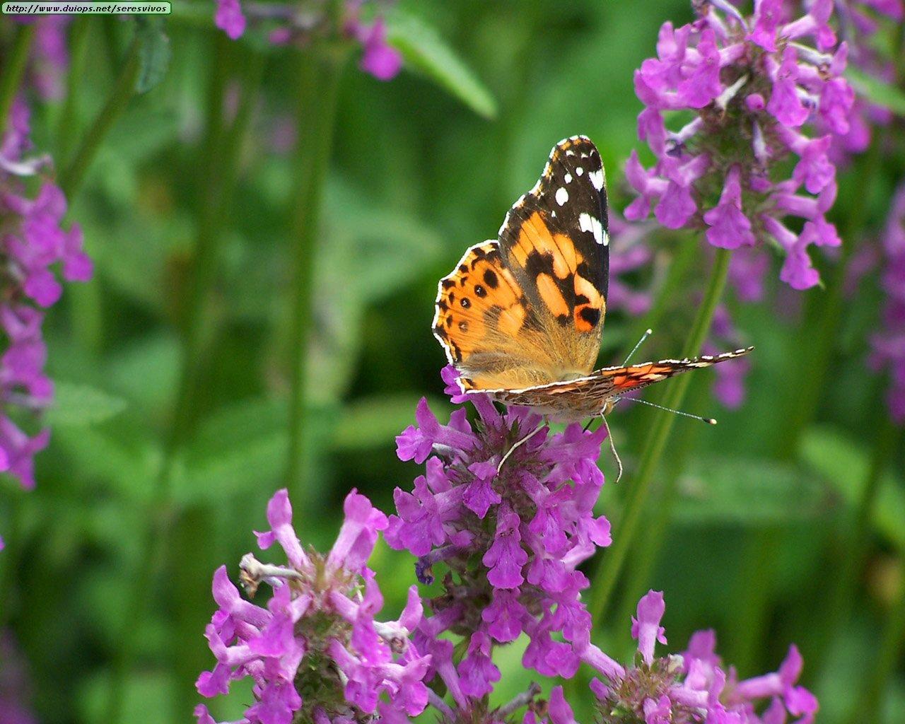 fotos de mariposas  i