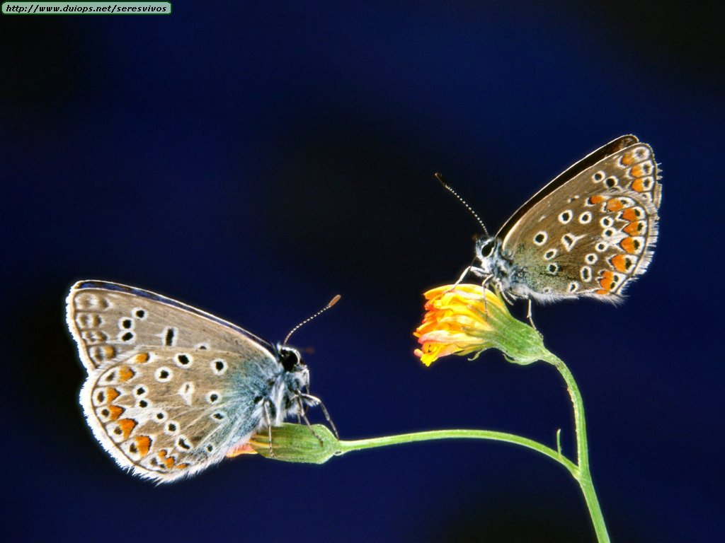increibles fotos de mariposas