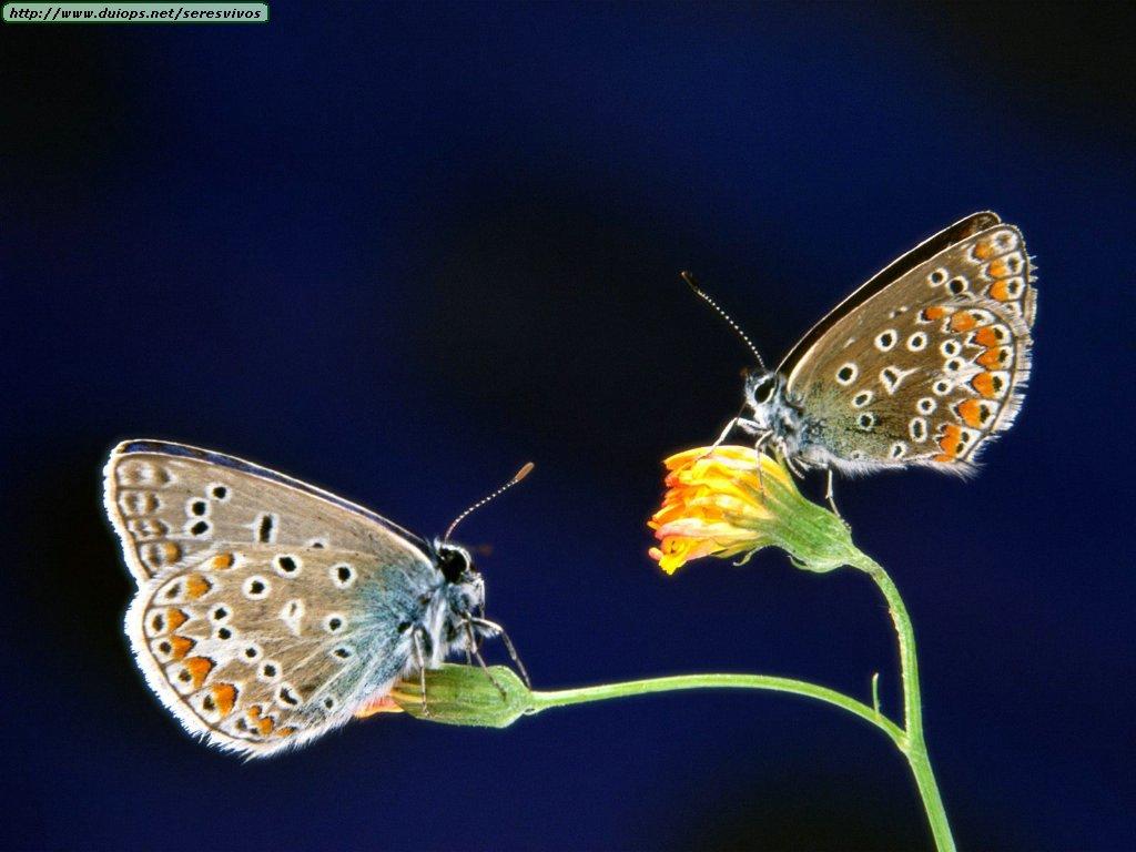 Fotografias de mariposas varias