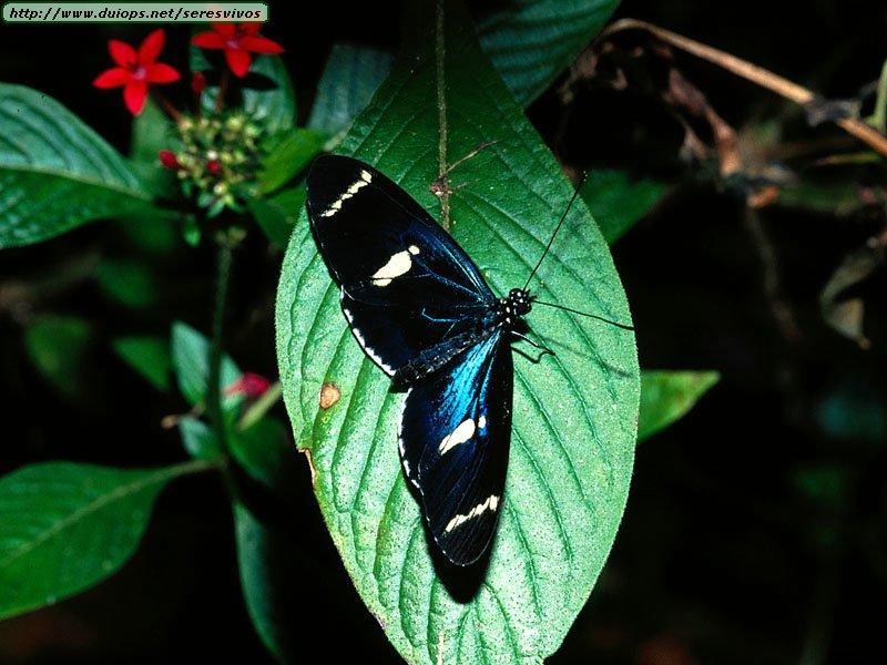 butterflies of costa rica case analysis