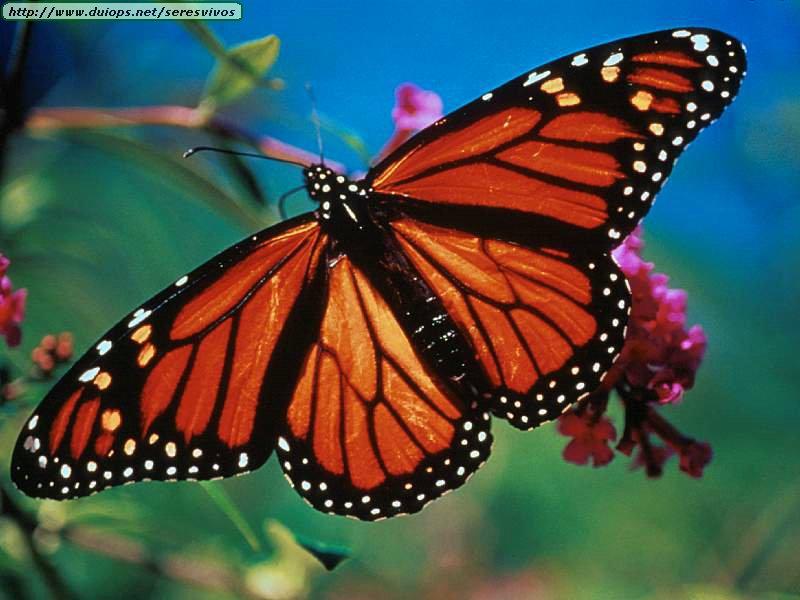 Фотографии Butterfly On Morrison, Гонконг - изображения Отель.
