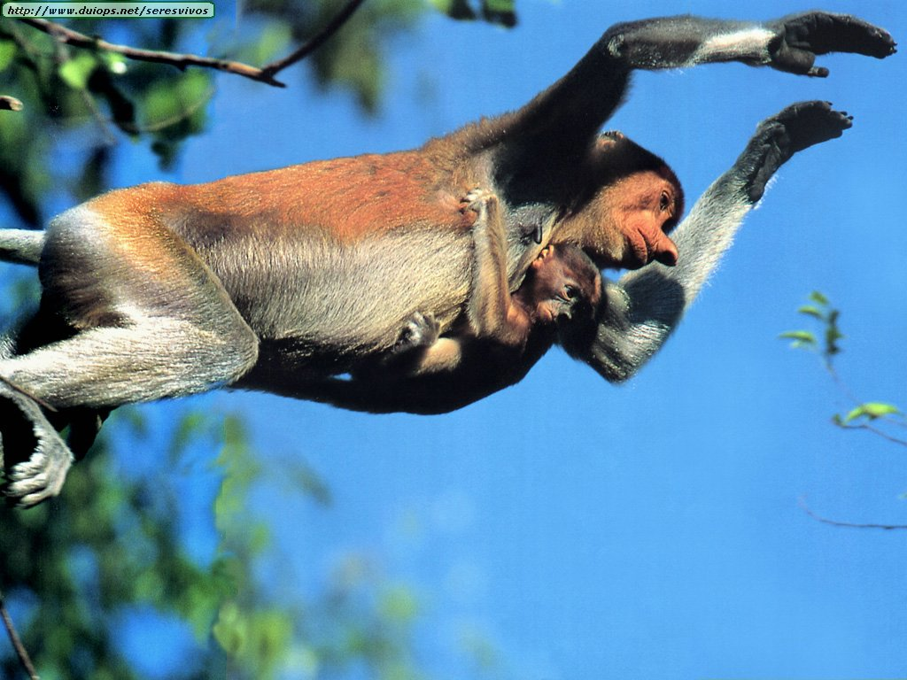 galeria monos: