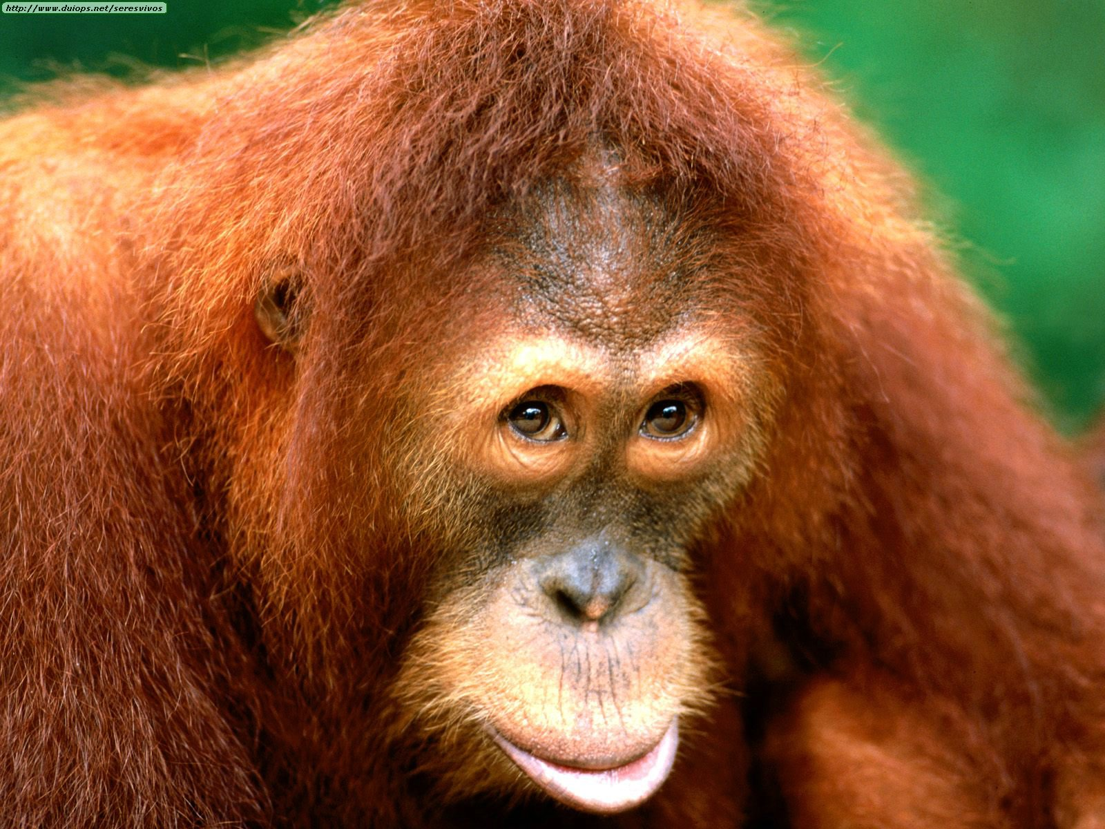 10 animales en peligro extincion