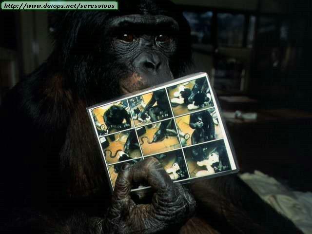 http://www.duiops.net/seresvivos/galeria/orangutanes/NGB10276.JPG