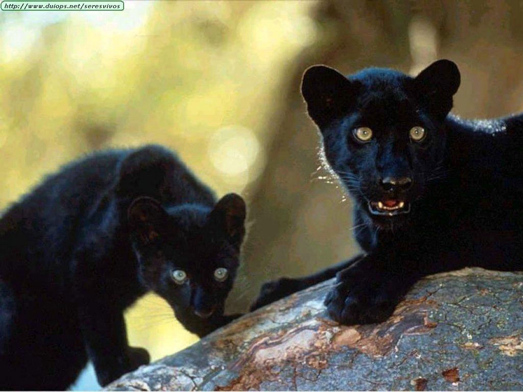 Los animales mas bellos del mund