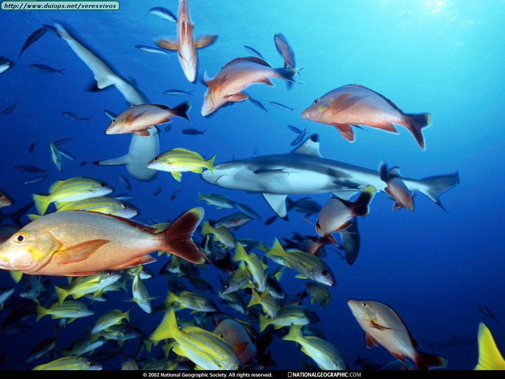 Fotos de peces v for Variedad de peces